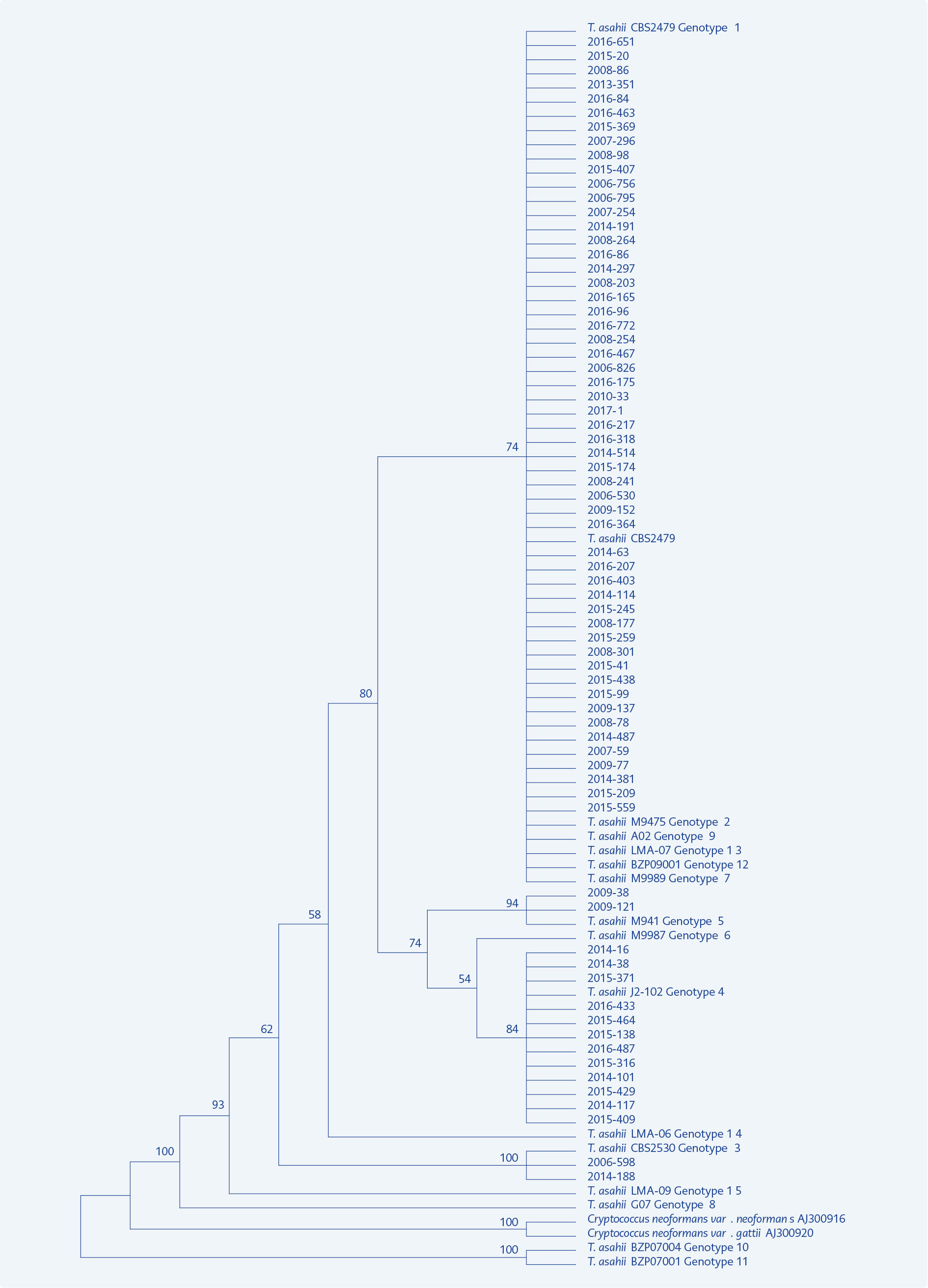 <strong>Figure 1.</strong> Phylogenetic tree constructed for distribution of 70 <i>T. asahii</i> clinical isolates and 15 reference genotypes.