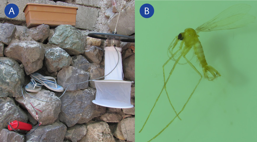 <strong>Figure 2.</strong> A: CDC light traps used to collect Phlebotomus B: A specimen of the caught Phlebotomus